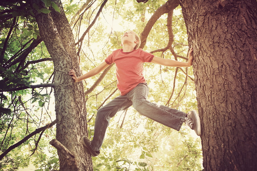 Climbing tree Charlie Hersman